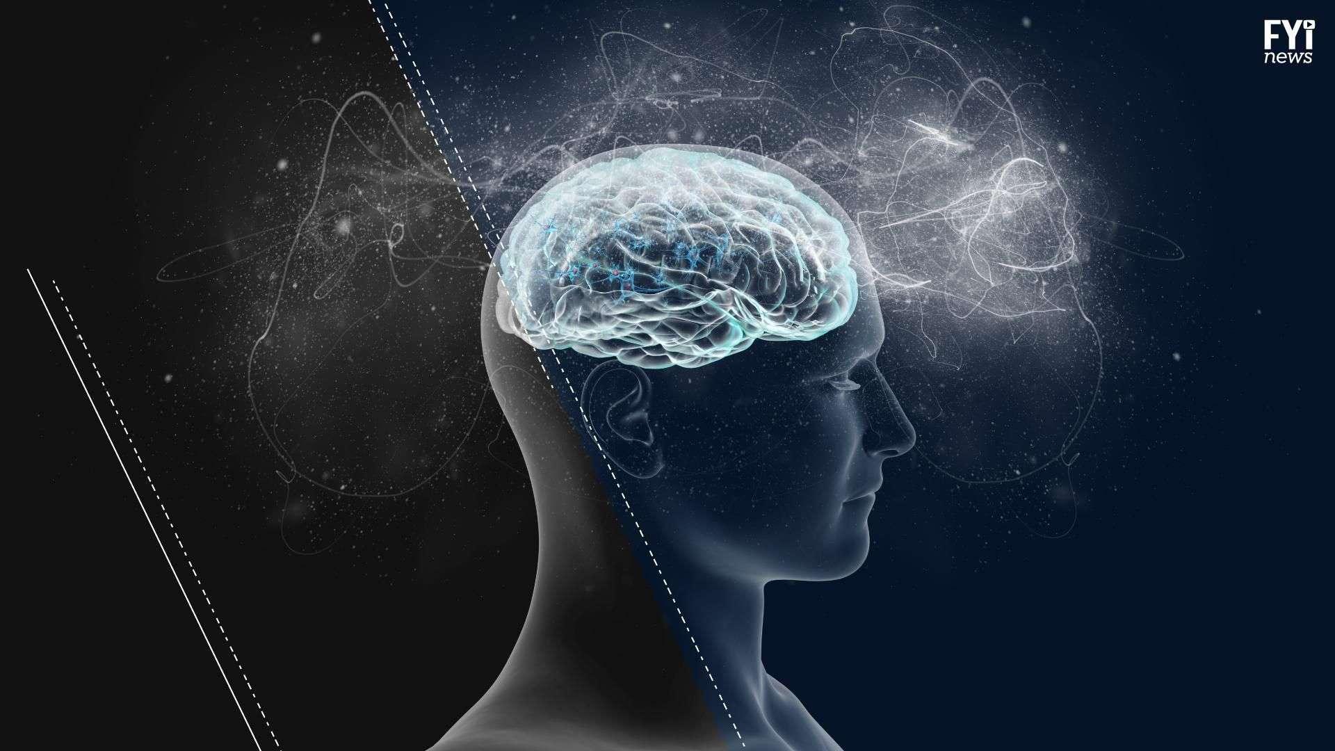 ¿De qué parte del cerebro salen las decisiones que tomamos?