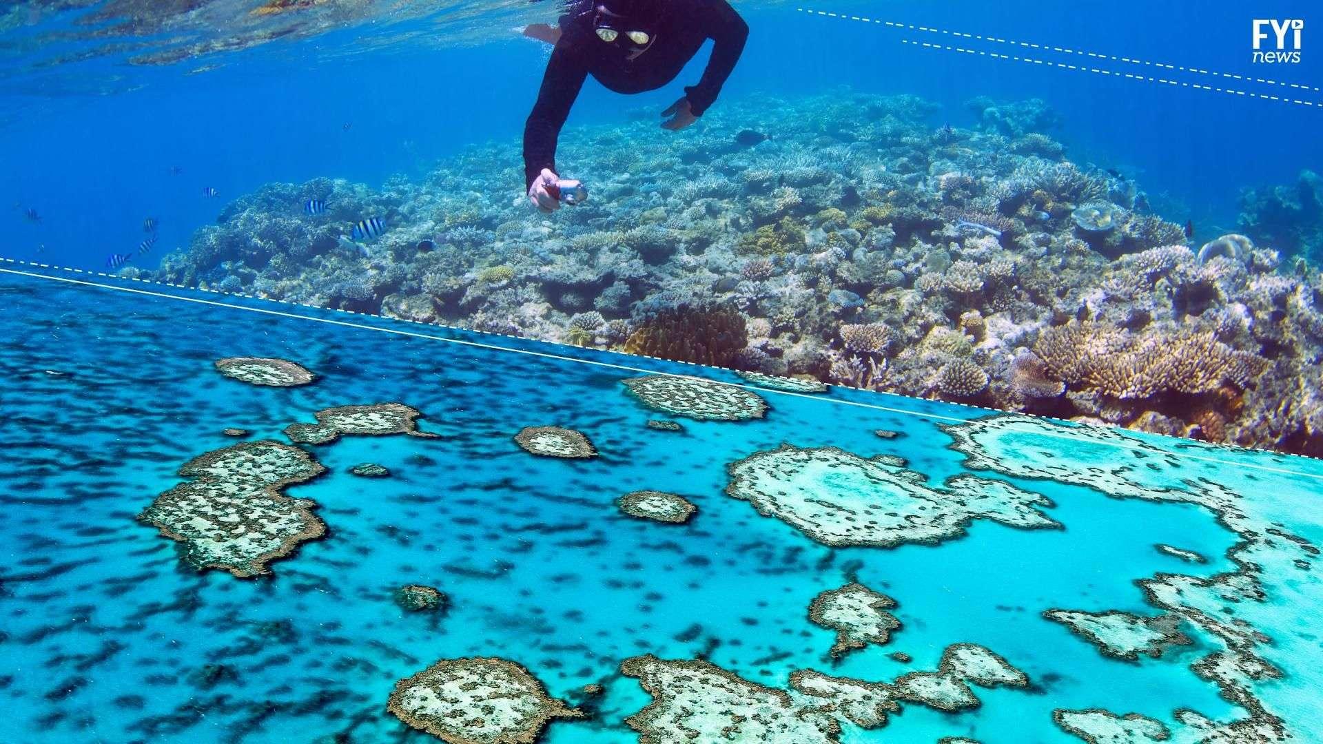 Gran Barrera de Coral sufre daño sin precedentes