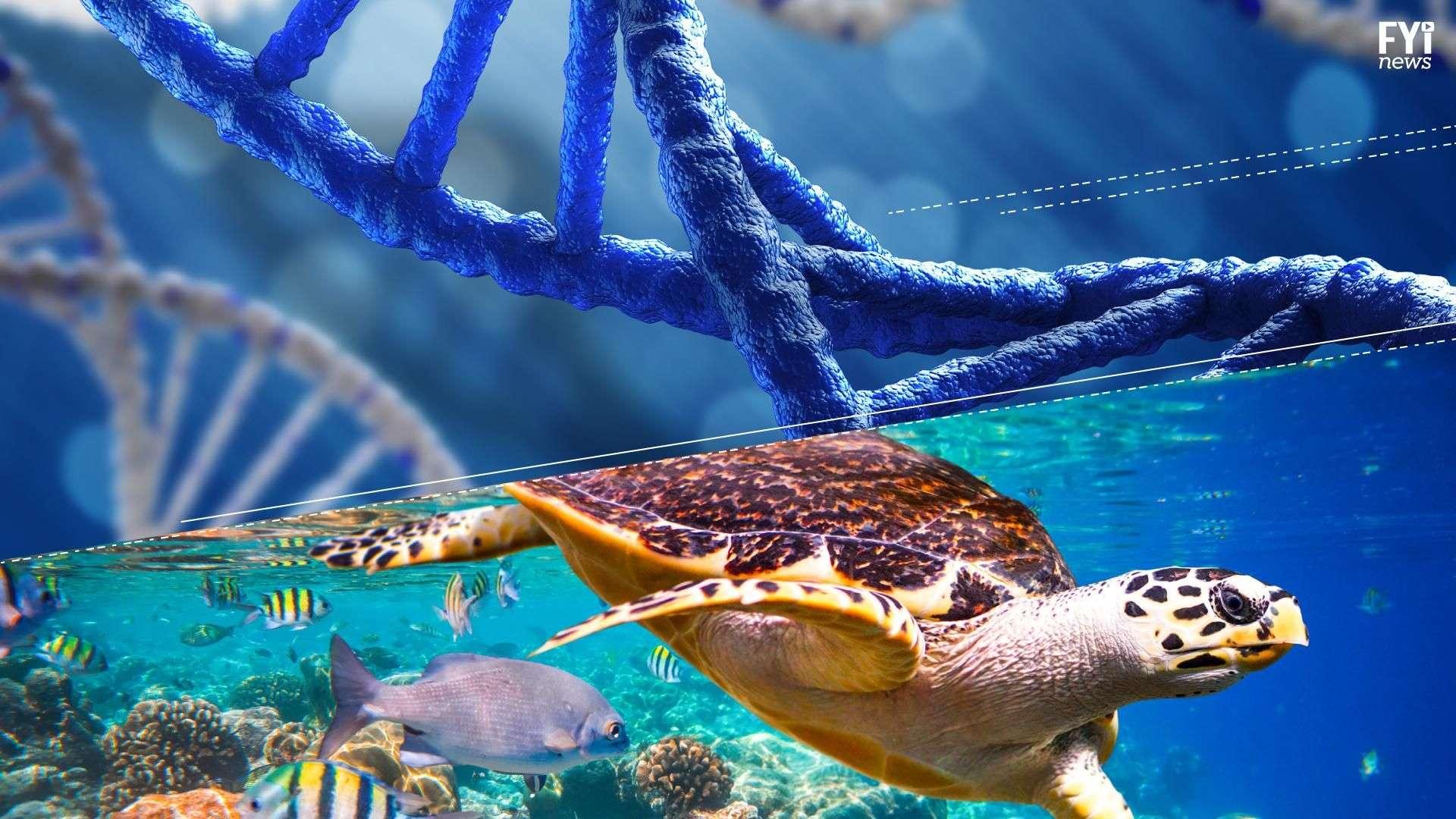 El ADN residual nos dice mucho sobre el mar