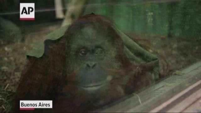 Tras cierre de zoo Buenos Aires, animales siguen enjaulados