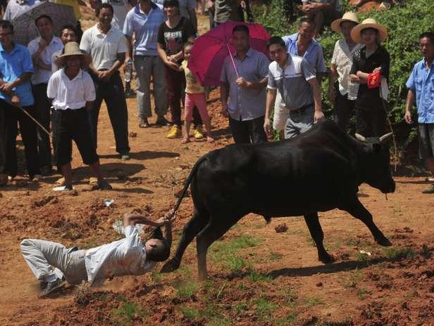 A diferencia de las corridas de toros españolas, los chinos prefieren sentarse y mirar como los toros pelean a muerte. Sin embargo, si alguno de ellos se cansa de pelear contra su contricante, los voluntarios intentarán devolverlo al campo de batalla con todos los medios a su alcance. Foto: Reuters en español