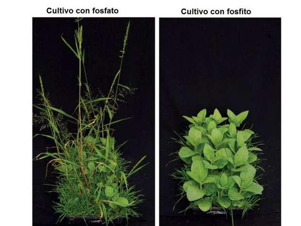 Modifican mexicanos cultivo de tabaco Foto: Agencia Reforma