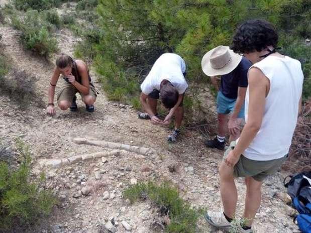 Científicos del Institut Català de Paleontologia analizan unos huesos de hadrosauros Foto: ICP