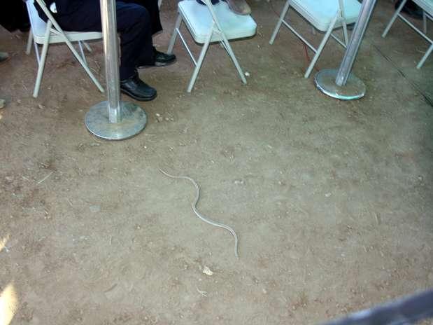 Víbora en evento de Felipe Calderón Foto: Agencia Reforma