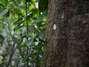 En febrero de 2012, científicos de la Universidad de Exeter en el Reino Unido descubrieron que algunas plantas se comunican entre sí, lo que los expertos han considerado como una forma de hablar. La BBC emitió un documental relacionado a esta materia en el que se observa cómo algunas plantas no solo activan una toxina para disuadir a los herbívoros, sino que también advierten a otras que las están atacando a través de las emisiones de gas. Foto: Getty Images