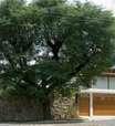 Uso da madeira ajuda a dar estilo brasileiro a casa de SP