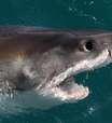"""Homem após ataque de tubarão: """"não doeu tanto quando mordeu"""""""