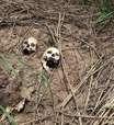 'Tive que subir em cadáveres para escapar': o relato chocante de sobreviventes de massacre no Congo