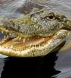 Crocodilo mata pastor durante batismo em lago da Etiópia