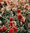 Florais para a sensualidade