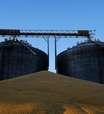 Colheita de milho 2ª safra supera 80% da área em MT, diz Imea