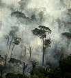 Incêndio já consumiu mais de metade do Parque do Juquery