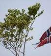 """Indígenas pedem """"asilo"""" à Noruega para árvore brasileira"""
