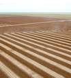 Plantio de soja em Mato Grosso salta para 45% da área de 2021/22