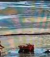 Pessoas ficam atoladas na areia de Balneário Camboriú