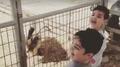 El vídeo en WhatsApp del niño y la cabra no es lo que parece