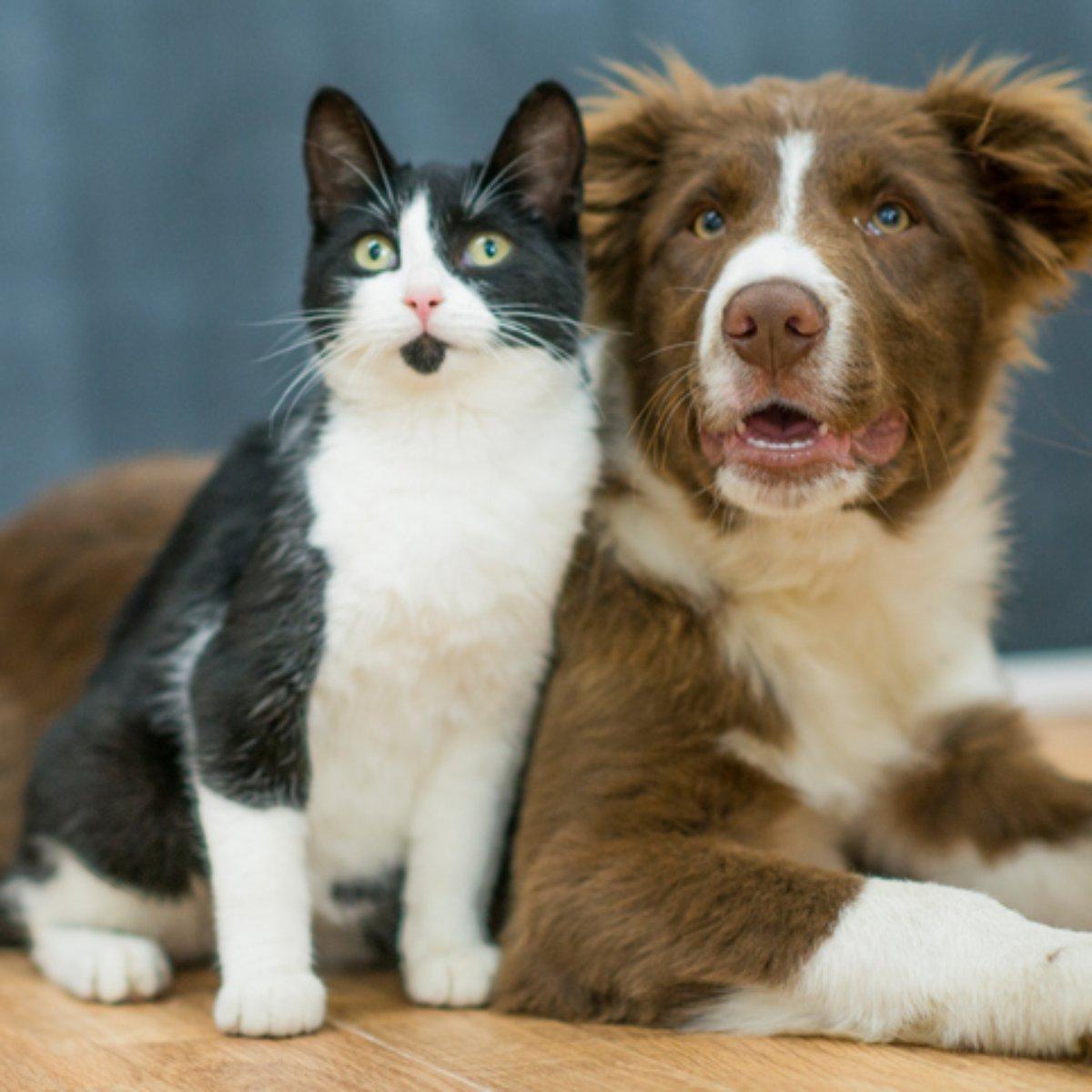 Gatas E Cadelas Podem Ter Filhotes De Pais Diferentes