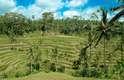Subaks de Bali, Indonésia: na ilha indonésia de Bali, os canais que irrigam os terraços de arroz são conhecidos como subaks e conectam templos de água. O sistema faz parte da cultura local e existe desde o século nove, fazendo dos cultivadores de arroz de Bali os mais bem-sucedidos da Indonésia