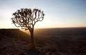 Namíbia - Menos frequentada do que outros destinos africanos como Tanzânia ou Quênia, a Namíbia oferece tantas atrações quanto seus vizinho, com preços mais acessíveis para os turistas. O Parque Nacional de Etosha tem cerca de 20 mil km² com uma rica fauna que conta com mais de 100 espécies de mamíferos e 300 espécies de aves, facilmente avistados graças à escassez de vegetação. O deserto do Namibe, no sul do país, tem dunas vermelhas que se encontram com o oceano em paisagens impressionantes. E, apesar de suas condições áridas, tem uma pequena população de animais como elefantes, gazelas, antílopes e avestruzes em parques como o Sperregebiet e o Naukluft