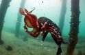 Mergulhadores registraram uma incrível batalha entre uma foca e um polvo