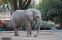 Além dos animais, o passeio pelo zoológico inclui obras arquitetônicas, como o templo indiano dos elefantes, o pavilhão gótico dos ursos e o palácio francês dos leões, dentre outros