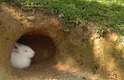 Também ligado à tradição religiosa, coelho tornou-se símbolo de ressurreição, por ser o primeiro animal a sair da toca após o inverno, justamente no período pascal