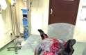 Os veterinários acreditam que a cadela se feriu em uma rinha e foi abandonada pelos donos
