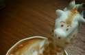 O barista japonês Kazuki Yamamoto cria artes em 3D com espuma de leite e café