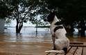 20 de fevereiro - O nível do rio Madeira em Rondônia atingiu 17,79 metros e a maioria das famílias retiradas das áreas de risco foi levada para 11 abrigos da prefeitura ou estão em casas de parentes