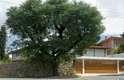 A casa no bairro de Pinheiros, em São Paulo, foi reformada e passou a se destacar pela amplitude, pela integração de ambientes e pelo uso farto de madeira. A obra ficou a cargo do escritório LAB Arquitetos, dos sócios Marino Barros e Rodrigo Leopoldi. Informações: (11) 3031-9481