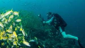 Cómo tomar fotografías bajo el agua
