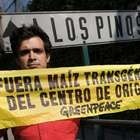 """Greenpeace critica """"indefinición"""" de EPN hacia transgénicos"""