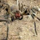 Polícia é acionada por engano após homem matar aranha