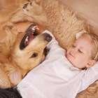Comportamento dos pets é exemplo a ser seguido, diz vidente