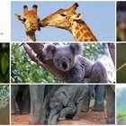 Razones por las que los humanos admiran a los animales