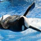 SeaWorld promete acabar com show de orcas