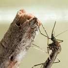 Pernambuco decreta emergência para controle do Aedes aegypt