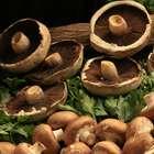 Governo debate garantia de alimentos mais saudáveis