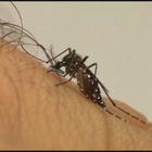 Flórida confirma três grávidas infectadas pelo zika