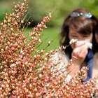 Las altas temperaturas han reactivado las alergias al polen