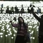 Hong Kong celebra San Valentín con 25.000 rosas de luz