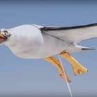 Un 'dron gaviota' arroja crema solar sobre los bañistas