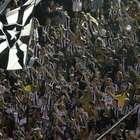 Botafogo lança promoção no setor Norte da Arena para o ...