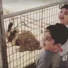 El vídeo viral en WhatsApp del niño y la cabra no es lo ...