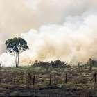 Desmatamento na Amazônia cresce 29% em um ano