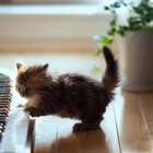 """¿Por qué se celebra el """"Día Internacional del Gato""""?"""