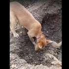 Emotivas imágenes de un perro enterrando a su hermano ...