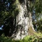 Brasil tem maior diversidade de árvores do planeta, diz ...