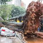 Chuvas derrubam árvore e decretam estado de atenção em SP