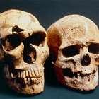 Encuentran en Marruecos los restos más antiguos de Homo ...